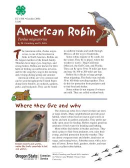 Image of The Wildlife Garden: American Robin: (Turdus migratorius) publication