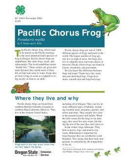 Image of The Wildlife Garden: Pacific Chorus Frog (Pseudacris regilla) publication