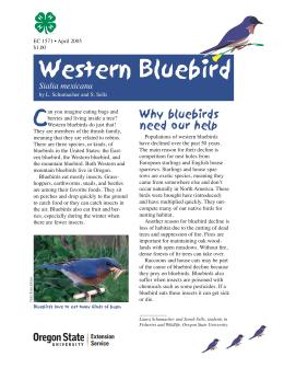 Image of The Wildlife Garden: Western Bluebird (Sialia mexicana) publication