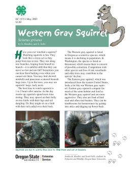 Image of The Wildlife Garden: Western Gray Squirrel (Sciurus griseus) publication