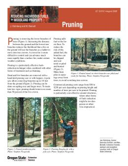 Image of Reducing Hazardous Fuels on Woodland Property: Pruning publication