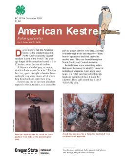 Image of The Wildlife Garden: American Kestrel (Falco sparverius) publication