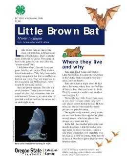Image of The Wildlife Garden: Little Brown Bat (Myotis lucifugus) publication