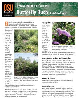 Image of Invasive Weeds in Forestland: Butterfly Bush publication