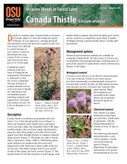 Image of Invasive Weeds in Forestland: Canada Thistle publication
