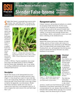 Image of Invasive Weeds in Forestland: Slender False-brome publication