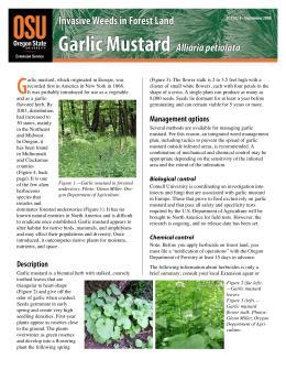 Image of Invasive Weeds in Forestland: Garlic Mustard publication