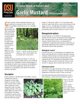 Image of Invasive Weeds in Forestland: Garlic Mustard publication