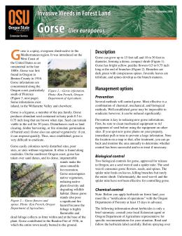 Image of Invasive Weeds in Forestland: Gorse publication