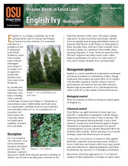 Image of Invasive Weeds in Forestland: English Ivy publication