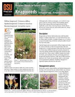 Image of Invasive Weeds in Forestland: Knapweeds publication