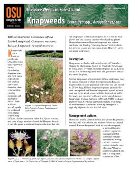 Image of Invasive Weeds in Forestland: Knapweeds publication