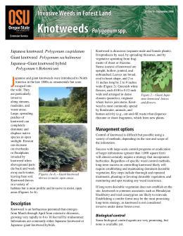 Image of Invasive Weeds in Forestland: Knotweeds publication