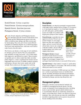 Image of Invasive Weeds in Forestland: French, Portuguese, Scotch, and Spanish Broom publication