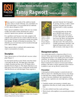 Image of Invasive Weeds in Forestland: Tansy Ragwort publication