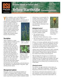 Image of Invasive Weeds in Forest Land: Yellow Starthistle publication