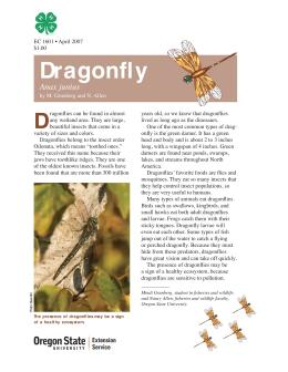 Image of The Wildlife Garden: Dragonfly (Anax junius) publication