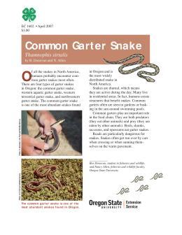 Image of The Wildlife Garden: Common Garter Snake (Thamnophis sirtalis) publication