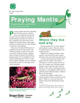 Image of The Wildlife Garden: Praying Mantis (Stagmomantis californica) publication