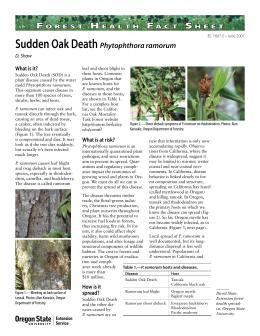 Image of Forest Health Fact Sheet: Sudden Oak Death (Phytophthora ramorum) publication