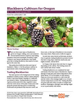 Image of Blackberry Cultivars for Oregon publication
