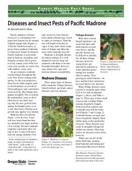 Image of Forest Health Fact Sheet: Diseases and Insect Pests of Pacific Madrone publication