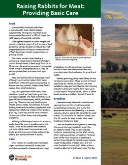 "Cover image of ""Living on The Land: Raising Rabbits for Meat—Basic Care"" publication"