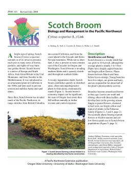 Image of Scotch Broom publication