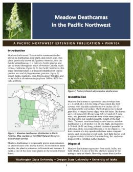 Image of Meadow Deathcamas in the Pacific Northwest publication
