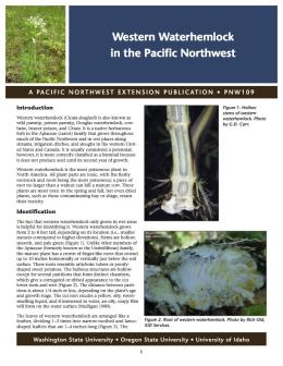 Image of Western Waterhemlock in the Pacific Northwest publication