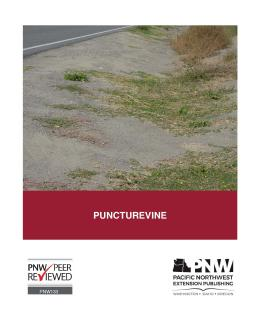 Image of Puncturevine publication
