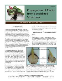 Image of Propagation of Plants from Specialized Structures publication