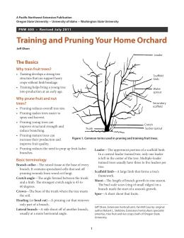 Image of Training and Pruning Your Home Orchard publication