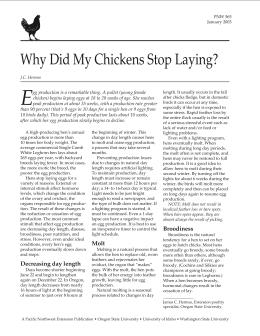 Image of Why Did My Chickens Stop Laying? publication