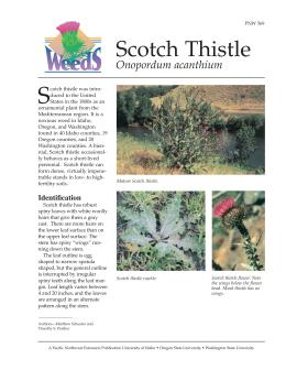 Image of Scotch Thistle publication
