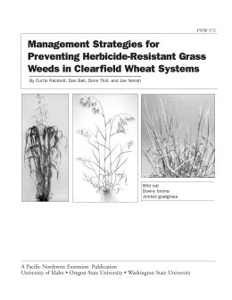 Image of Management Strategies for Preventing Herbicide-Resistant Grass Weeds in Clearfield Wheat Systems publication