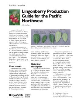 Image of Lingonberry Production Guide for the Pacific Northwest publication