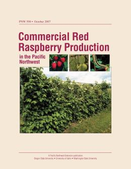 Image of Commercial Red Raspberry Production in the Pacific Northwest publication
