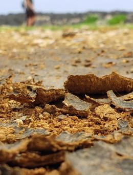 Image of Managing Salt-Affected Soils for Crop Production publication