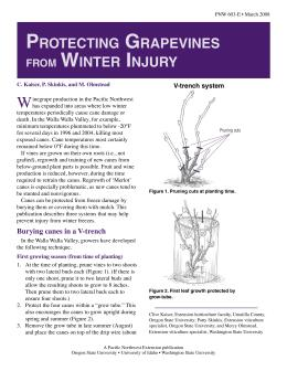Image of Protecting Grapevines from Winter Injury publication