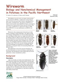 Image of Wireworm: Biology and Nonchemical Management in Potatoes in the Pacific Northwest publication