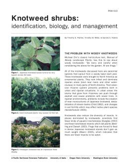Image of Knotweed Shrub Complex: Identification, Biology, and Management publication