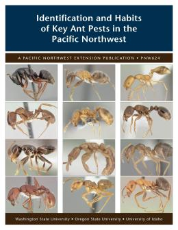 Image of Identification and Habits of Key Ant Pests in the Pacific Northwest publication