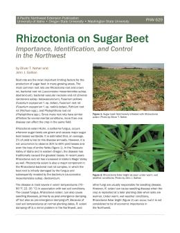 Image of Rhizoctonia on Sugar Beet: Importance, Identification, and Control in the Northwest publication