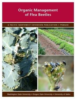 Image of Organic Management of Flea Beetles publication