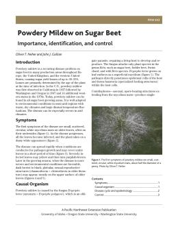 Image of Powdery Mildew on Sugar Beet: Importance, Identification, and Control  publication