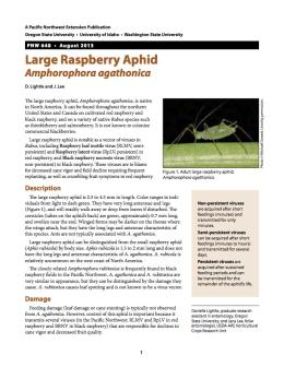 Image of Large Raspberry Aphid publication