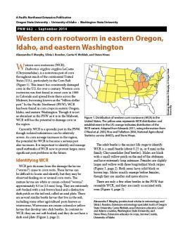 Image of Western Corn Rootworm in Eastern Oregon, Idaho, and Eastern Washington publication