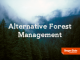 Cover image for alternative forest management series